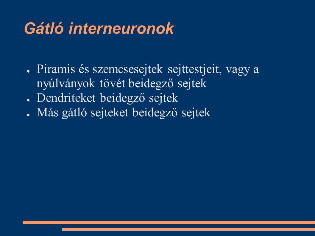 Gátló interneuronok Piramis és szemcsesejtek sejttestjeit, vagy a nyúlványok tövét beidegző sejtek.