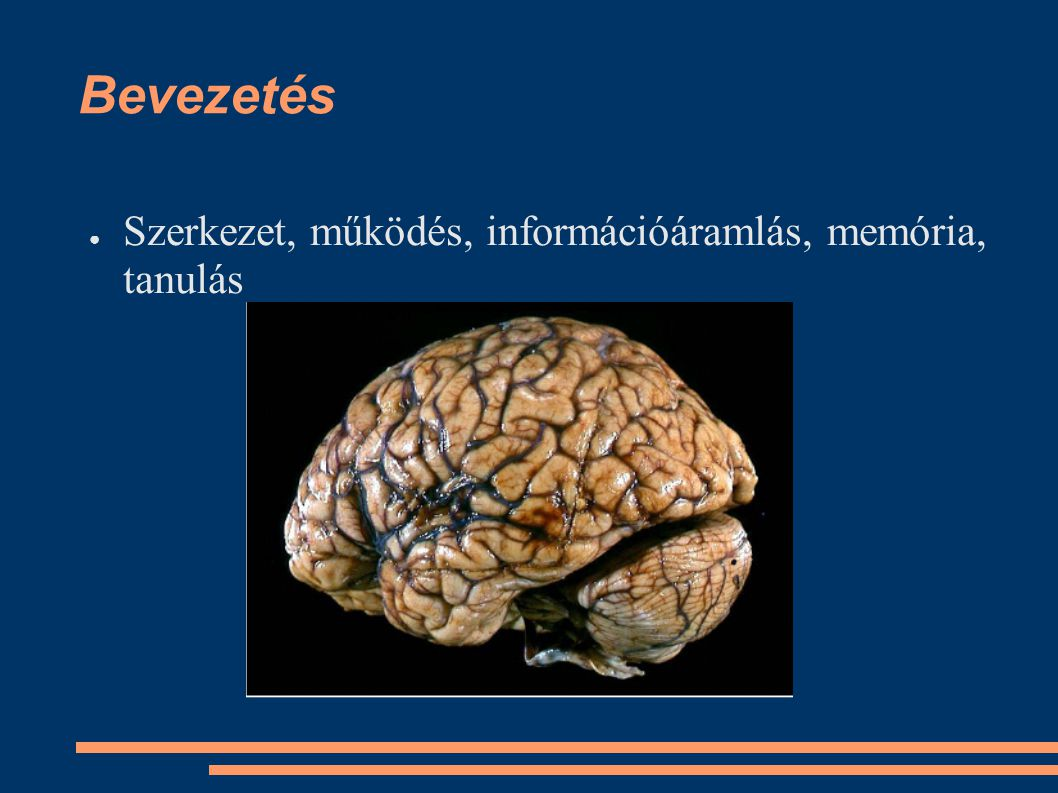 Bevezetés Szerkezet, működés, információáramlás, memória, tanulás