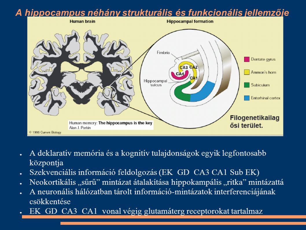 A hippocampus néhány strukturális és funkcionális jellemzője