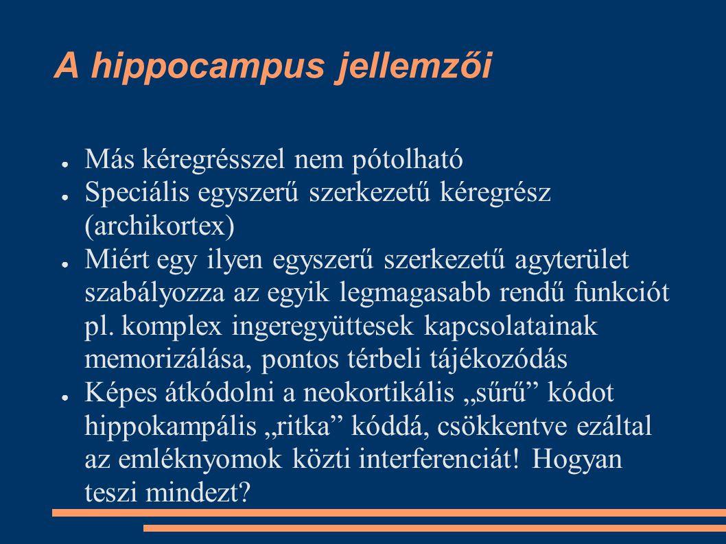 A hippocampus jellemzői
