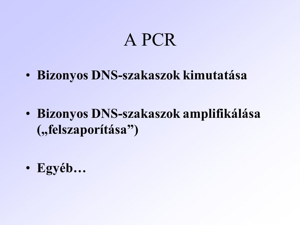 A PCR Bizonyos DNS-szakaszok kimutatása