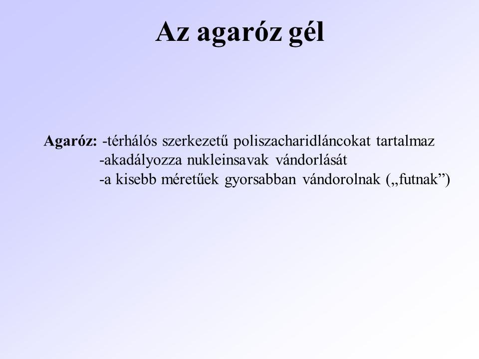 Az agaróz gél Agaróz: -térhálós szerkezetű poliszacharidláncokat tartalmaz. -akadályozza nukleinsavak vándorlását.