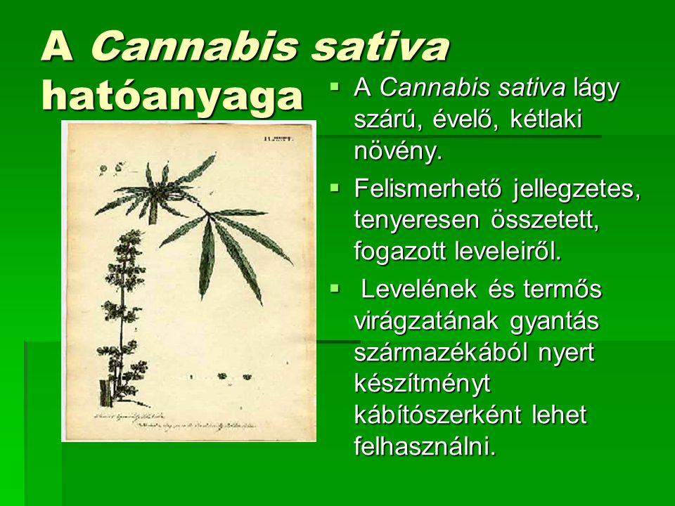 A Cannabis sativa hatóanyaga