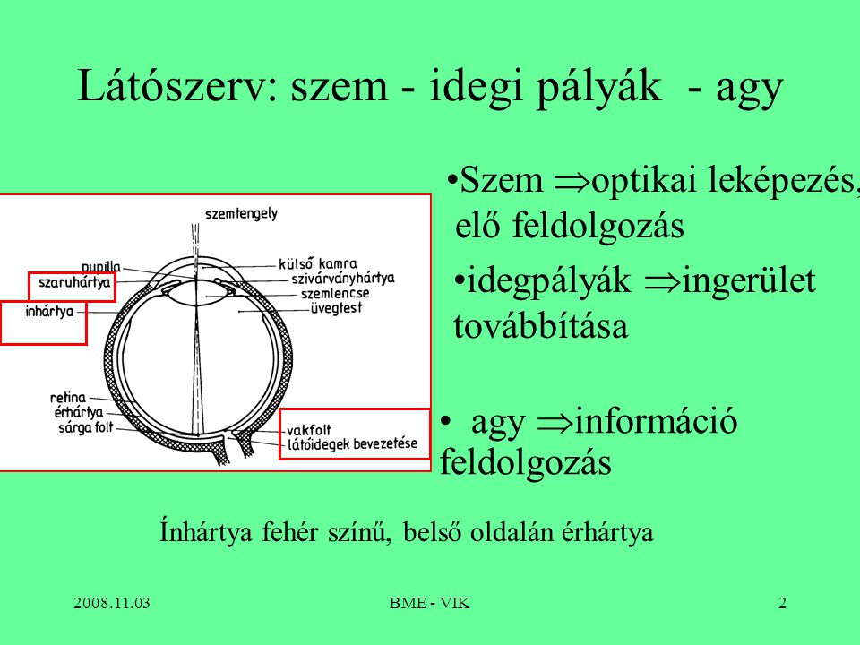 Látószerv: szem - idegi pályák - agy