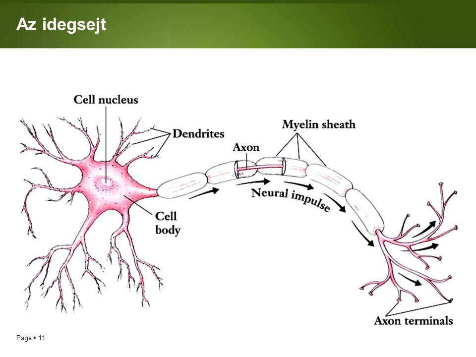 Az idegsejt