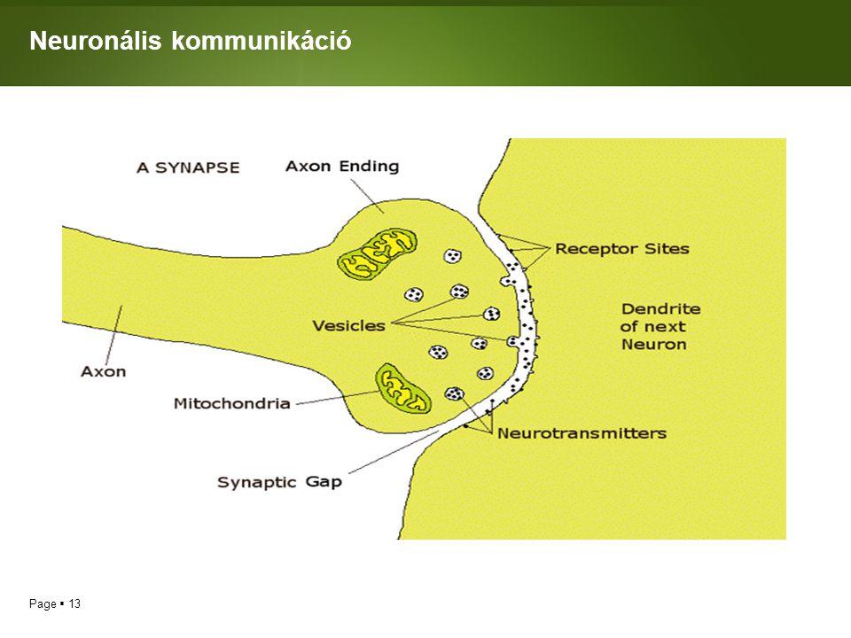 Neuronális kommunikáció