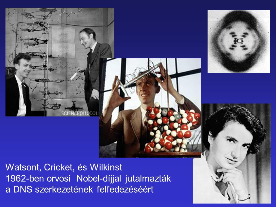 Watsont, Cricket, és Wilkinst