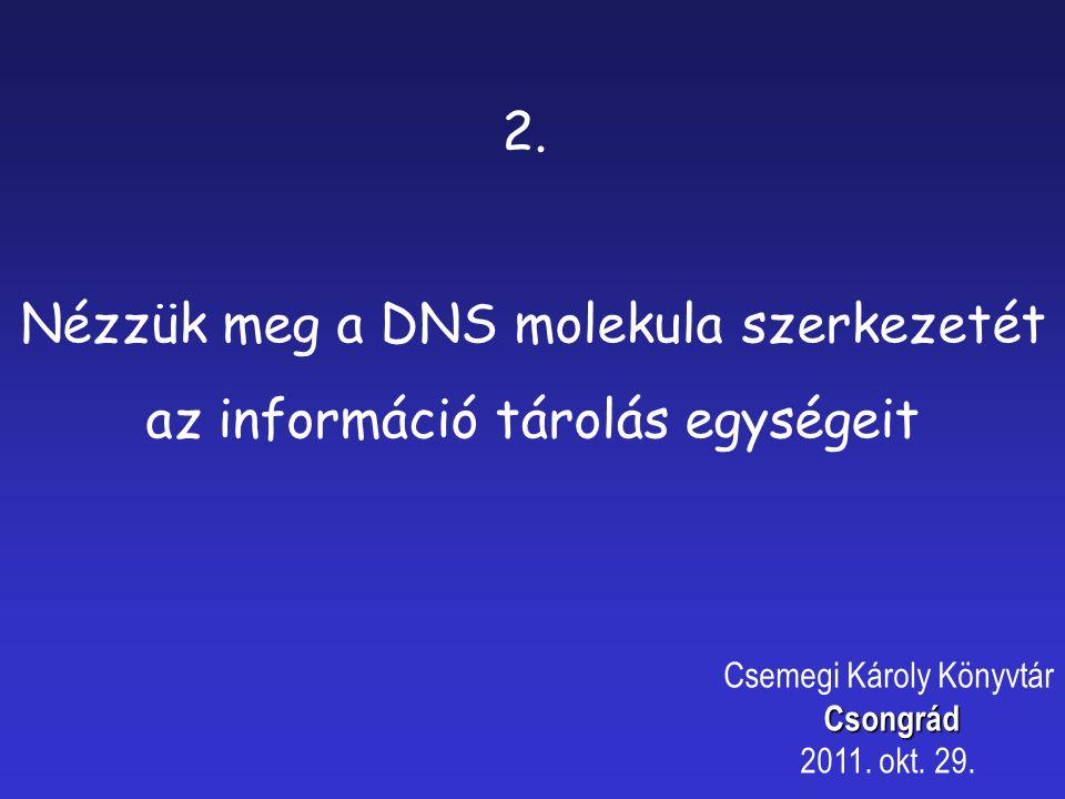 Nézzük meg a DNS molekula szerkezetét az információ tárolás egységeit