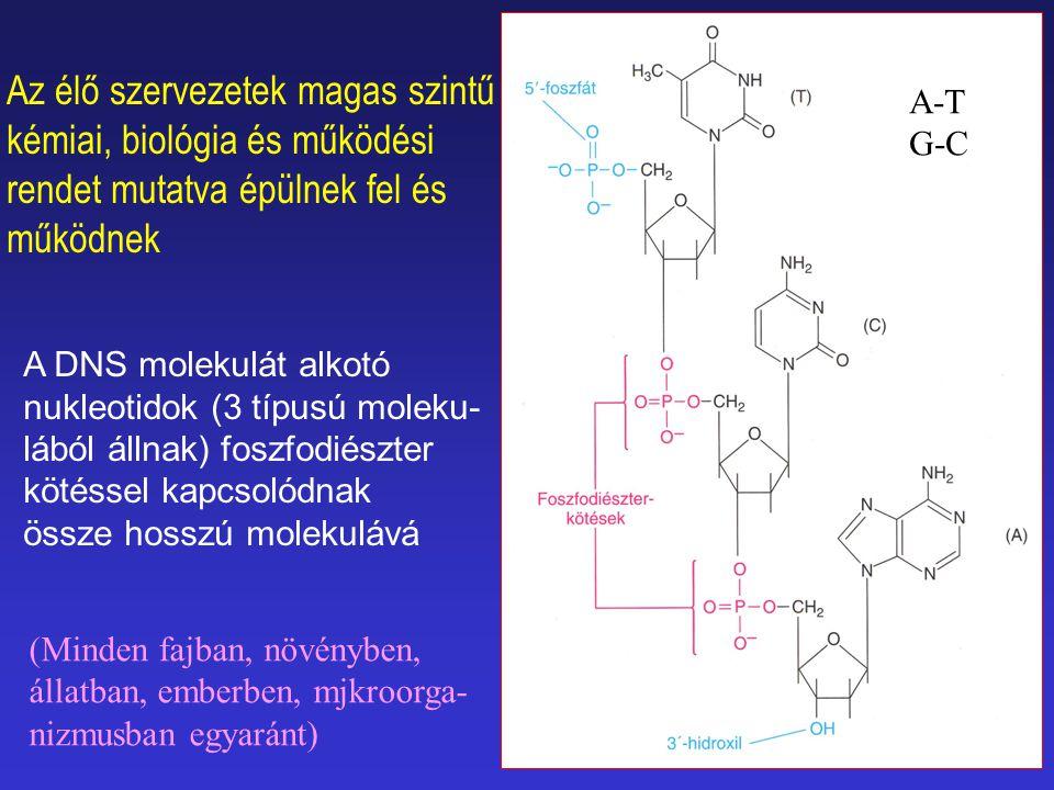 Az élő szervezetek magas szintű kémiai, biológia és működési