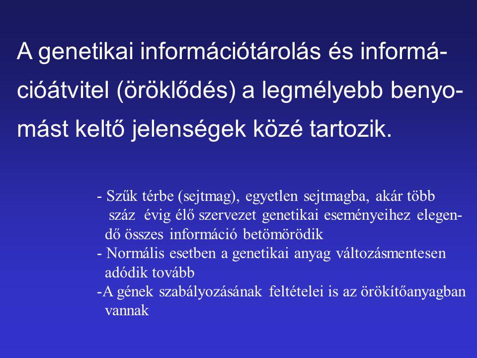 A genetikai információtárolás és informá-