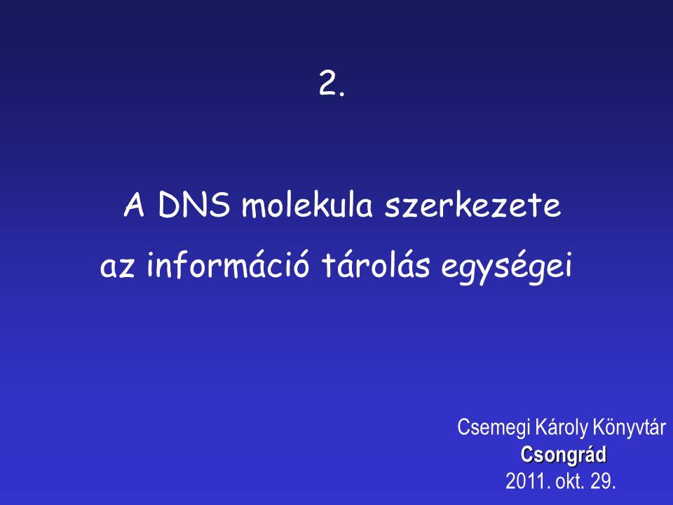 A DNS molekula szerkezete az információ tárolás egységei