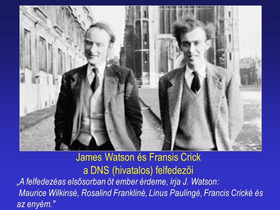 James Watson és Fransis Crick a DNS (hivatalos) felfedezői