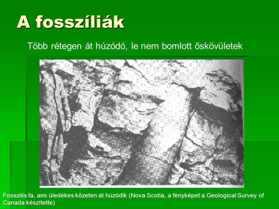 Több rétegen át húzódó, le nem bomlott őskövületek