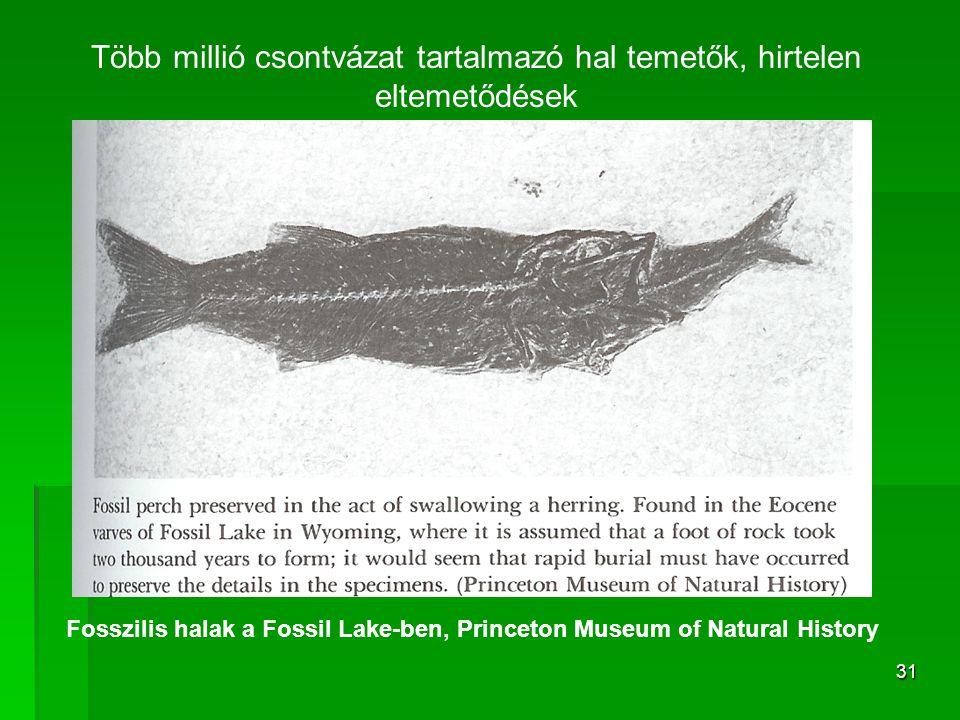 Több millió csontvázat tartalmazó hal temetők, hirtelen eltemetődések