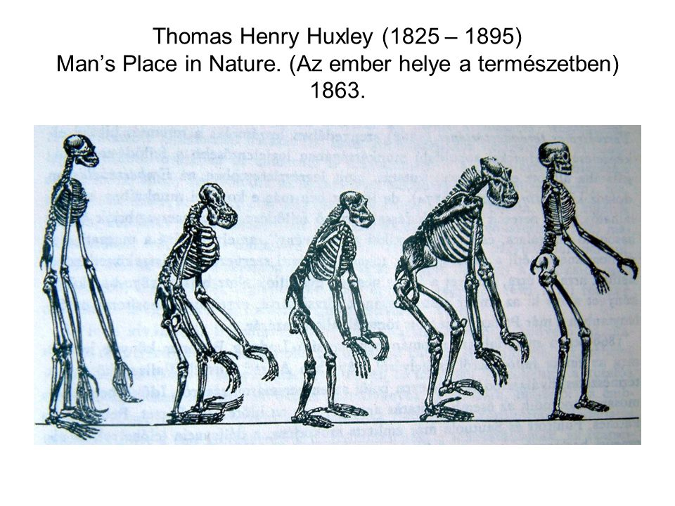 Thomas Henry Huxley (1825 – 1895) Man's Place in Nature