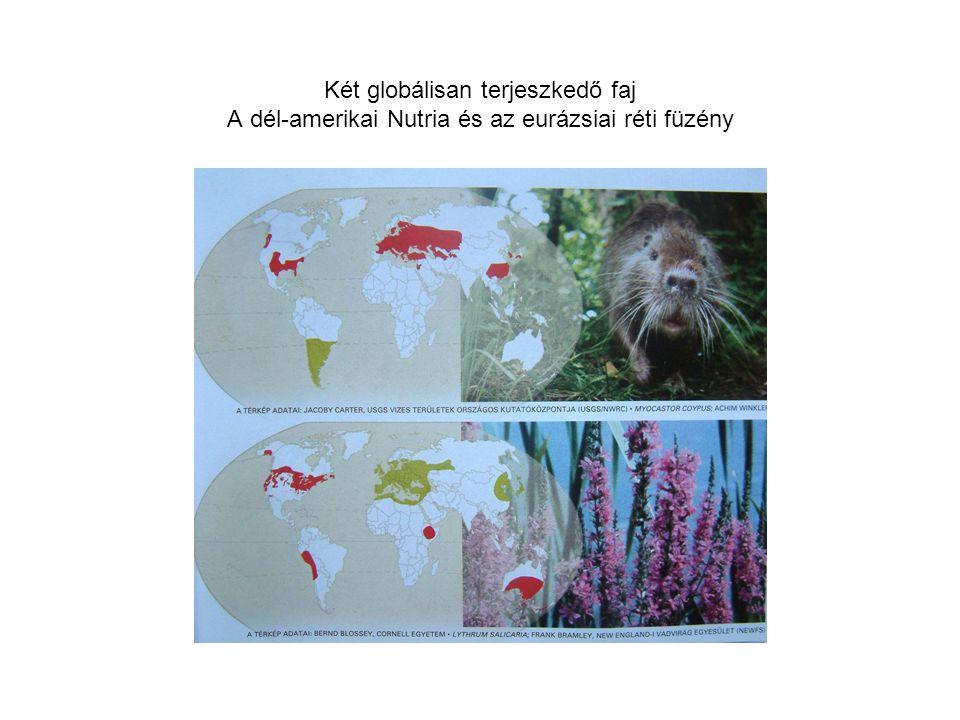 Két globálisan terjeszkedő faj A dél-amerikai Nutria és az eurázsiai réti füzény