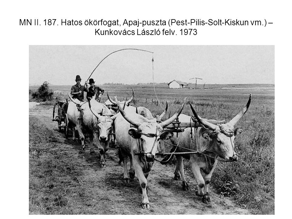 MN II. 187. Hatos ökörfogat, Apaj-puszta (Pest-Pilis-Solt-Kiskun vm