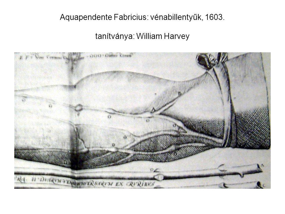 Aquapendente Fabricius: vénabillentyűk, 1603