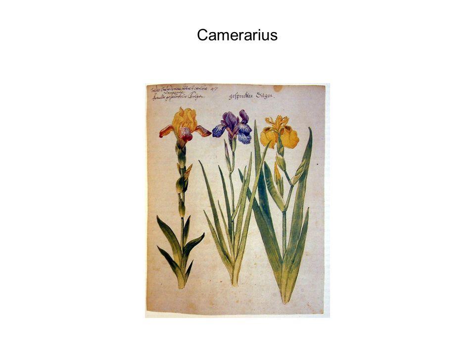 Camerarius