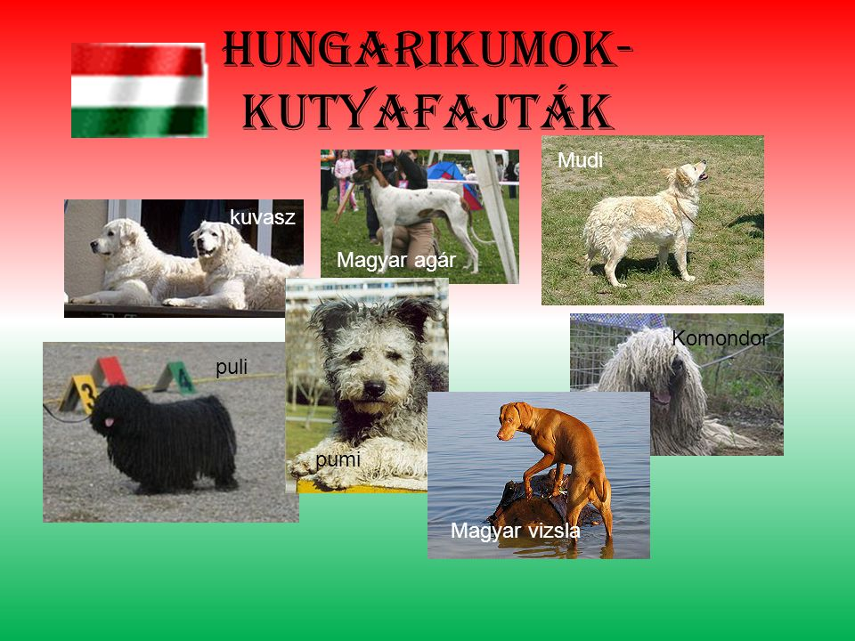 Hungarikumok- kutyafajták