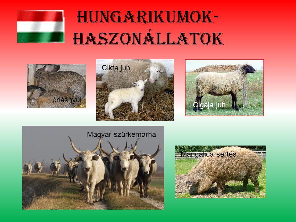 Hungarikumok- haszonállatok