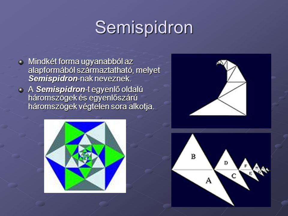 Semispidron Mindkét forma ugyanabból az alapformából származtatható, melyet Semispidron-nak neveznek.