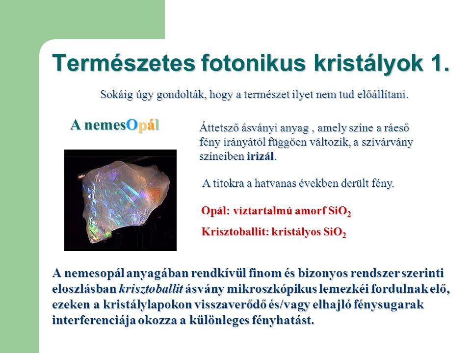 Természetes fotonikus kristályok 1.