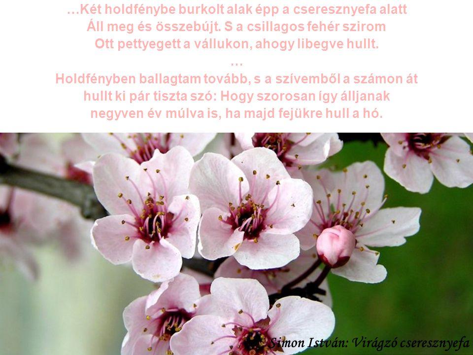Simon István: Virágzó cseresznyefa
