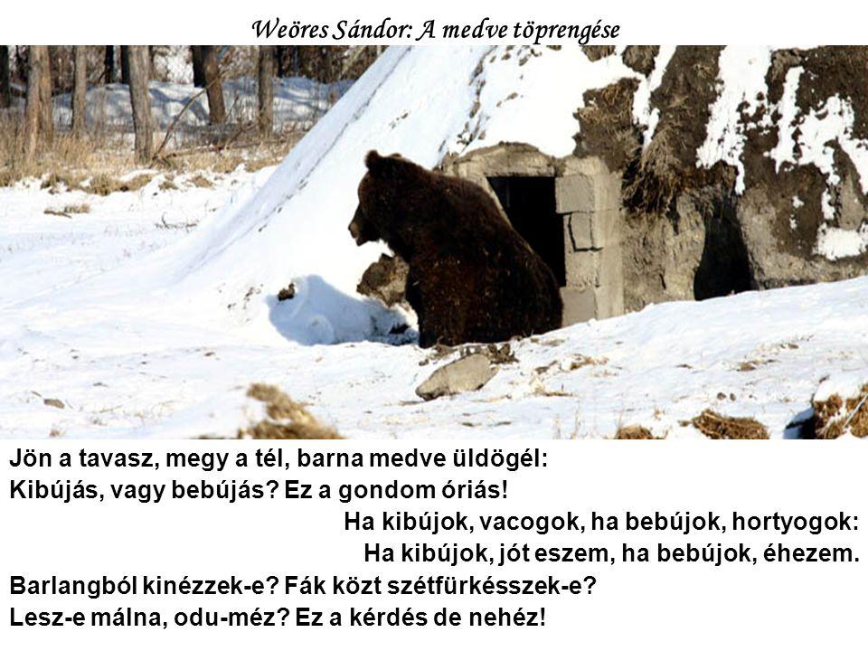 Weöres Sándor: A medve töprengése