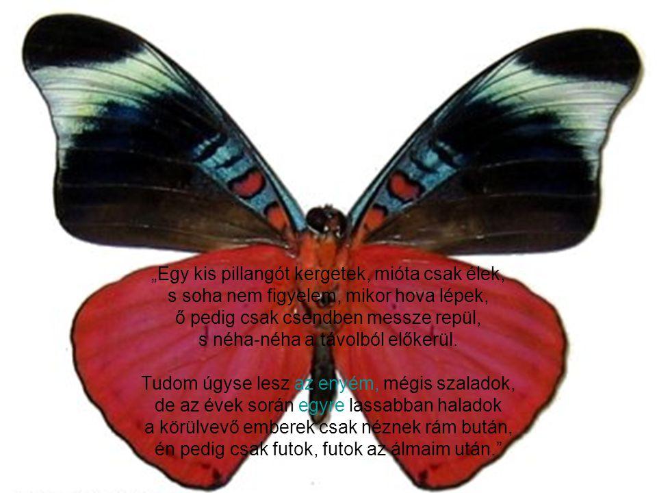 """""""Egy kis pillangót kergetek, mióta csak élek, s soha nem figyelem, mikor hova lépek, ő pedig csak csendben messze repül, s néha-néha a távolból előkerül."""