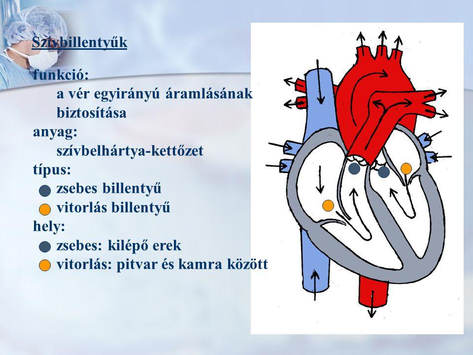 Szívbillentyűk funkció: a vér egyirányú áramlásának. biztosítása. anyag: szívbelhártya-kettőzet.