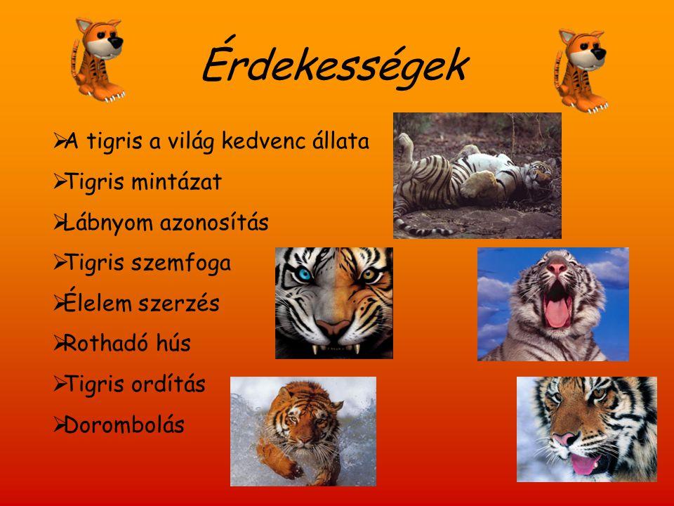 Érdekességek A tigris a világ kedvenc állata Tigris mintázat
