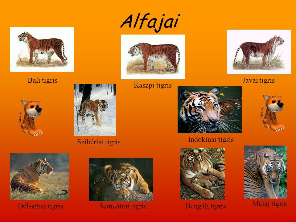 Alfajai Bali tigris Jávai tigris Kaszpi tigris Indokínai tigris