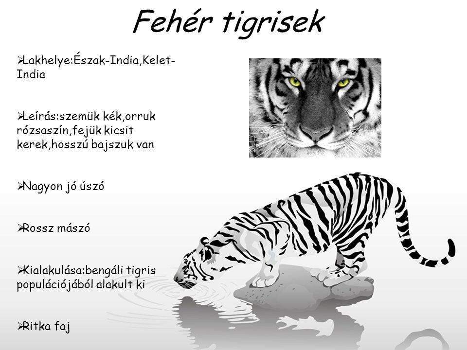 Fehér tigrisek Lakhelye:Észak-India,Kelet-India