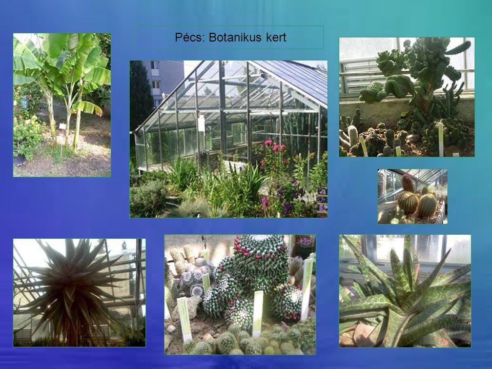 Pécs: Botanikus kert