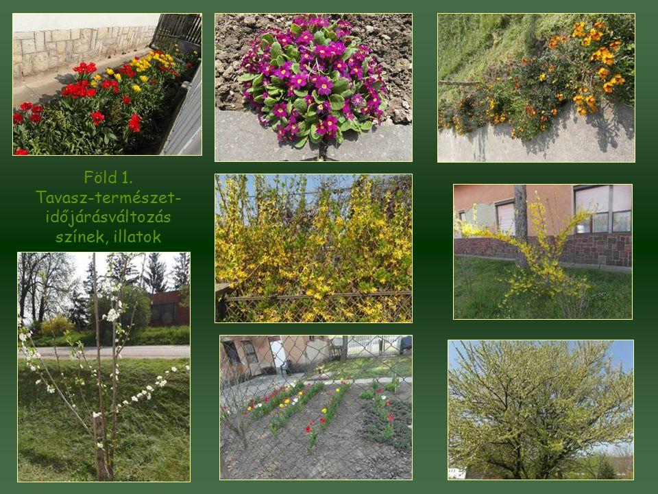 Tavasz-természet-időjárásváltozás