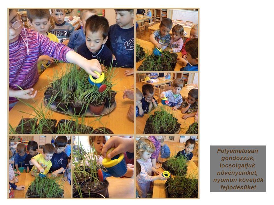 Folyamatosan gondozzuk, locsolgatjuk növényeinket, nyomon követjük fejlődésüket