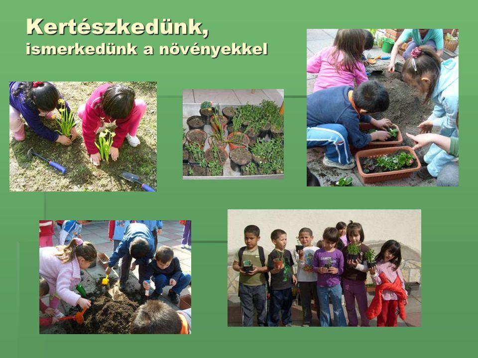 Kertészkedünk, ismerkedünk a növényekkel