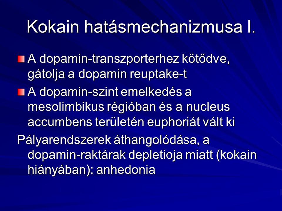 Kokain hatásmechanizmusa I.