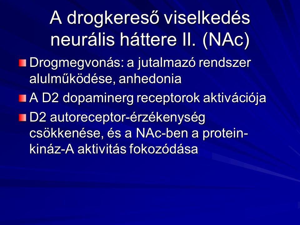 A drogkereső viselkedés neurális háttere II. (NAc)