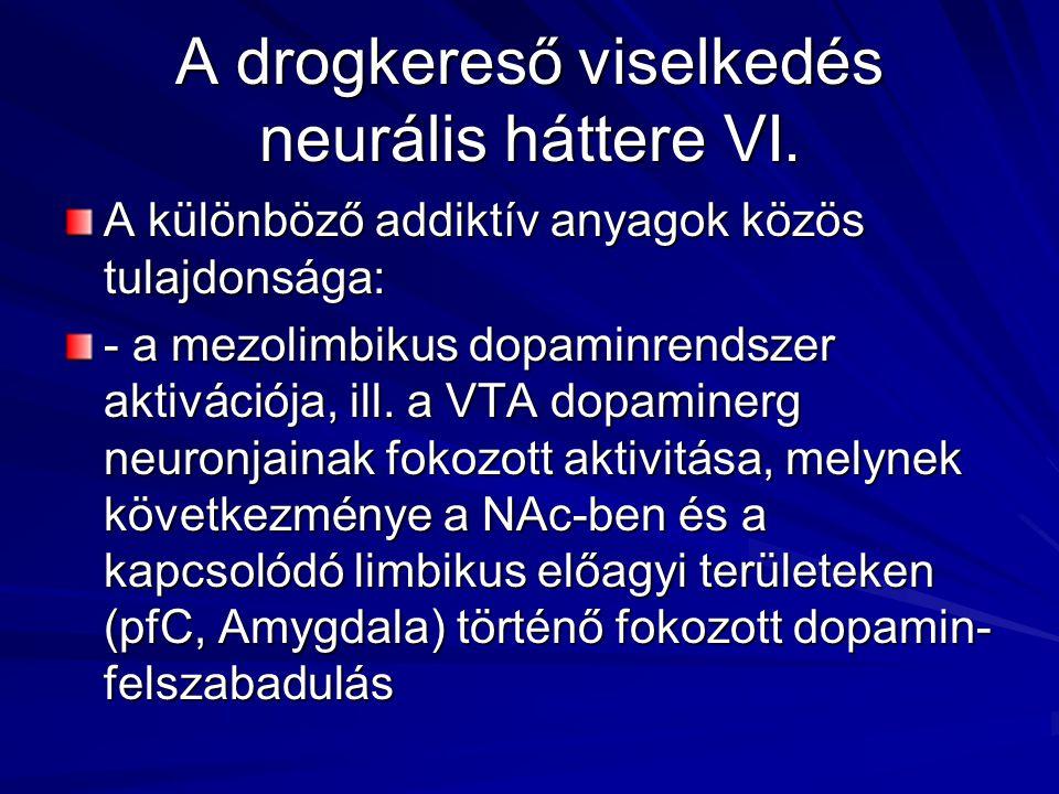 A drogkereső viselkedés neurális háttere VI.