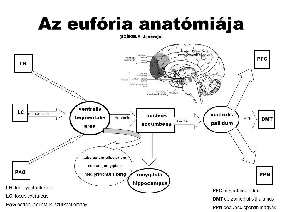 Az eufória anatómiája (SZÉKELY J: ábrája)