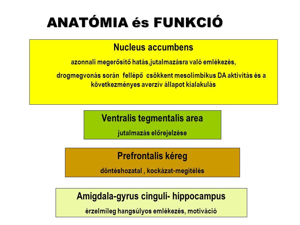 ANATÓMIA és FUNKCIÓ Nucleus accumbens Ventralis tegmentalis area