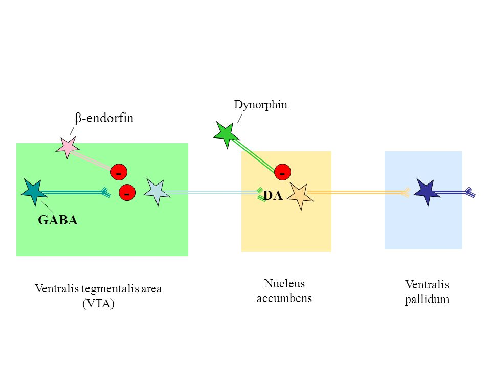 Ventralis tegmentalis area (VTA)