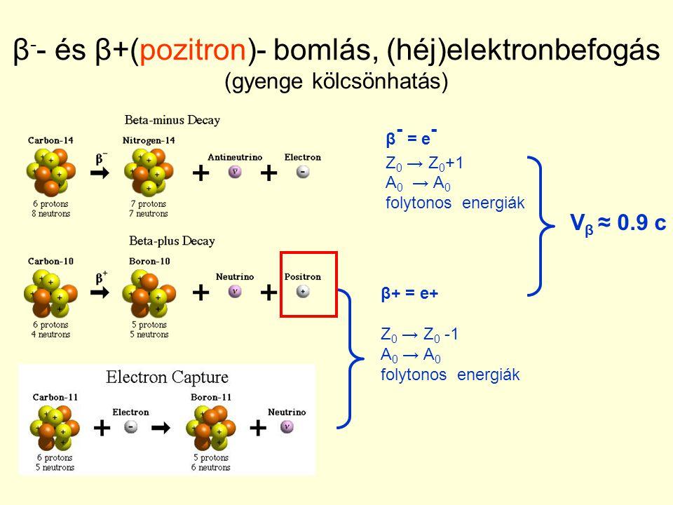 β-- és β+(pozitron)- bomlás, (héj)elektronbefogás (gyenge kölcsönhatás)