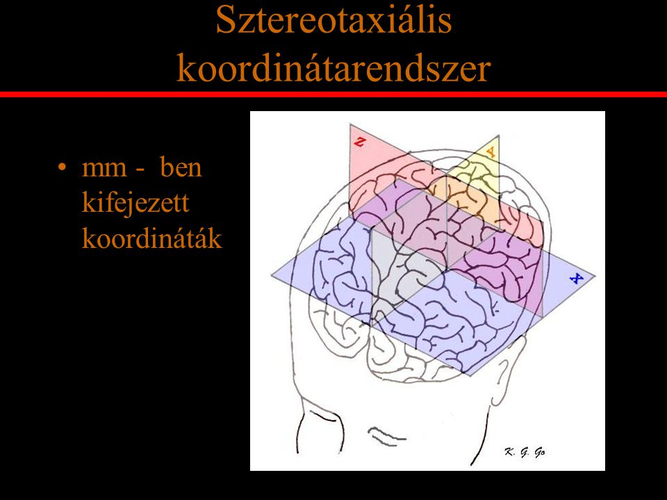 Sztereotaxiális koordinátarendszer