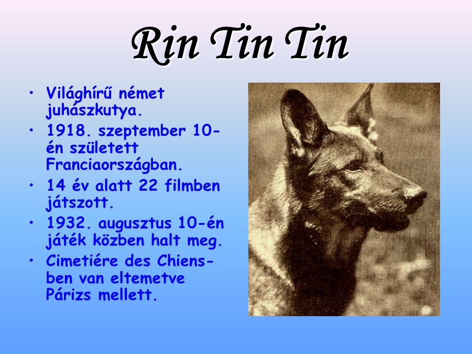 Rin Tin Tin Világhírű német juhászkutya.