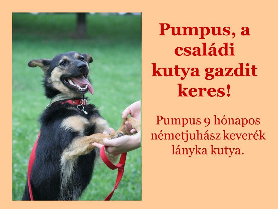 Pumpus, a családi kutya gazdit keres!