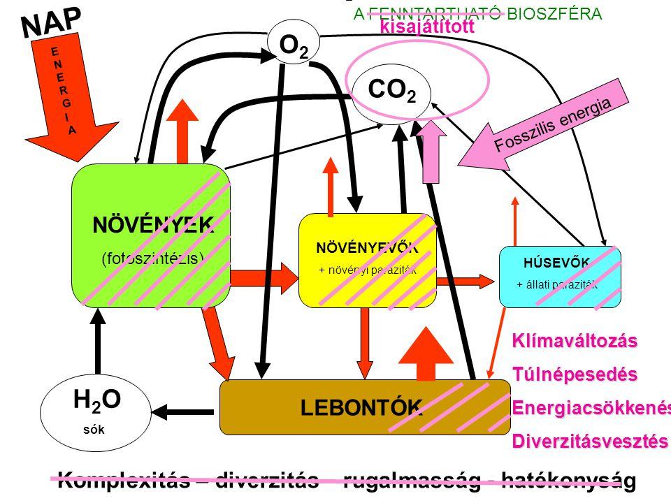 NAP A FENNTARTHATÓ BIOSZFÉRA. kisajátított. O2. ENERGIA. CO2. Fosszilis energia. NÖVÉNYEK. (fotoszintézis)