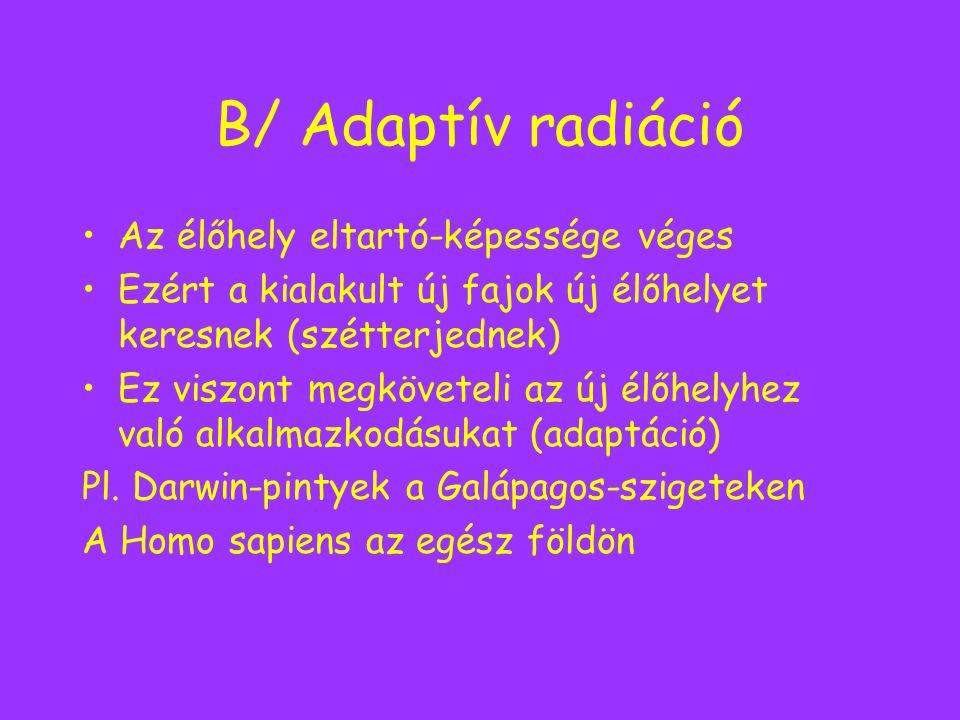 B/ Adaptív radiáció Az élőhely eltartó-képessége véges